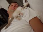 Tel chat, tel maître - Birma-Katze
