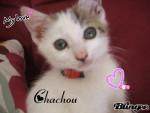 Chachou - Männlich (3 Jahre)