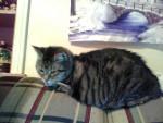 Tiger - (6 Jahre)