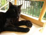 Katze  -   (Kürzlich geboren )