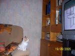 Katze Caramel regardant la télévision -   (Kürzlich geboren )
