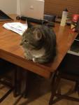 Katze Whiskers -  Männlich (Kürzlich geboren )