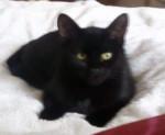 Katze Prunelle -  Weiblich (6 Monate)
