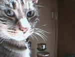 Grizette - (6 Jahre)