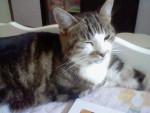 Katze Carlotta -   (Kürzlich geboren )
