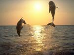 vde - Delphin (9 Monate)