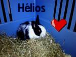 Hélios - Männlich Hase (1 Jahr)