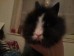 Chipie - Hase (4 Monate)