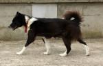 Hund  -  (Kürzlich geboren )