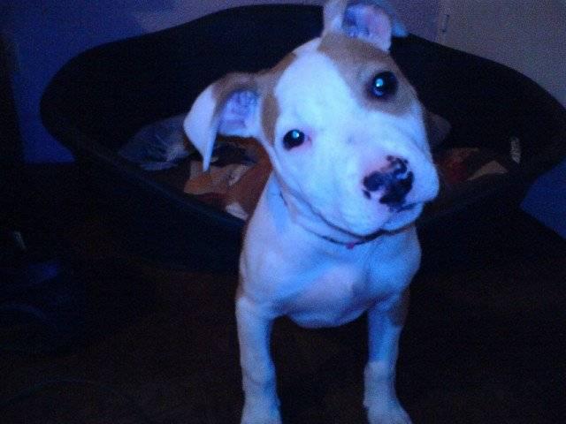 yuna - Hund (1 Jahr)
