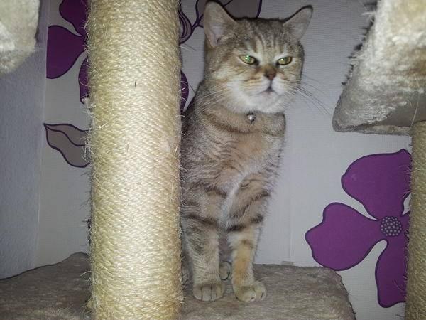 Kajo - Männlich Katze (2 Jahre)