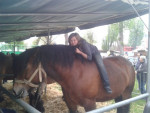 Patience - Pferd (5 Jahre)
