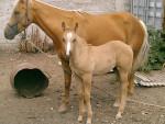 candy y chulo - Männlich Pferd (2 Monate)