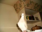 Vogel Doudoune - Weiblich (2 Jahre)