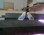 ale y dani - Vogel (6 Monate)