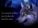 Valor - Wolf